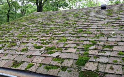 Mossy Roof Cleaning by Neptune Clean
